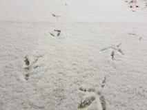 Traces des oiseaux dans la neige en hiver image libre de droits