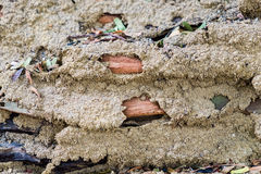 Traces destruction soil and sand Stock Images