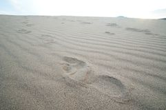 Traces of female bare feet on clean sand.  royalty free stock images