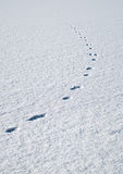 Traces in fresh loose snow Royalty Free Stock Photo