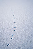 Traces in fresh loose snow Royalty Free Stock Photos