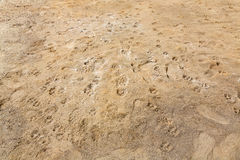 Traces on the ground Royalty Free Stock Photography