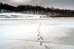 Traces of ice reaching the shore. Footprints on the dangerous ice, reaching the shore of the forest Royalty Free Stock Photos