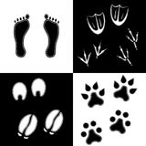 Traces of mammals and birds. Human traces, footprints of birds and mammals on the black and white squares designed like chess board Royalty Free Stock Photos