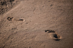 Traces of man walking on the sandy beach. Stock Photo