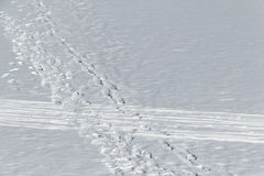 Traces of people on snow Stock Photography