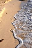 Traces on sand. Stock Photography