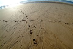 Traces in sand. A panorama of an sandbeach with crossed tracks Stock Photography