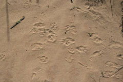 Traces in the sand Royalty Free Stock Photography