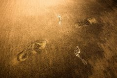 Traces in the sand. Large and small traces in the sand crossing each other Royalty Free Stock Photo