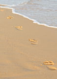 Traces on a sand Stock Photography