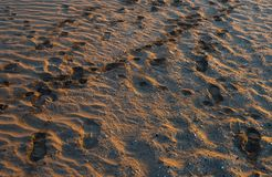 Traces on sand Stock Image