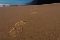 Traces in the sand on the beach royalty free stock photography