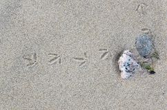 Traces of a small bird in the sand. A a stock photo