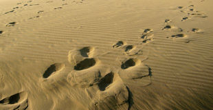 Traces at smooth surface of the sand with waves in the desert Royalty Free Stock Photography