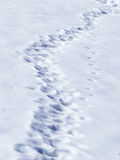 Traces in snow. Footprints and traces in snow Stock Photography