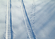 Traces on a snow Royalty Free Stock Photo