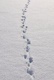 Traces in snow Royalty Free Stock Photography