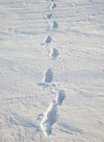 Traces on snow. Traces from last person, remained on snow Royalty Free Stock Photos