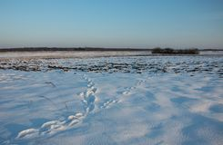 Traces on the snow, big meadow, horizon and sky. Winter view royalty free stock photo