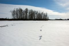 Traces on snow and copse. Traces on snow, horizon and copse, cloud and blue sky royalty free stock photos
