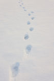 Traces in snow. Stock Photo