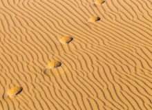 Traces on song in desert Royalty Free Stock Image