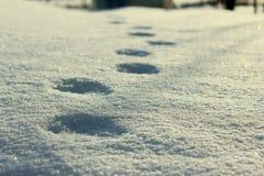 Traces sur la neige photographie stock libre de droits