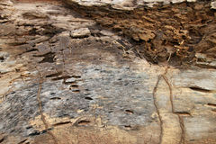 Traces of termites eat on old rotten wood Royalty Free Stock Photos