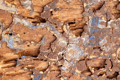 Traces of termites Stock Photo