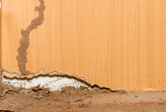 Traces of termites on old wood background. Stock Photos