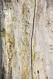 Traces from termites on  wood Royalty Free Stock Images