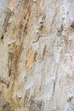 Traces from termites on wood. Close up Royalty Free Stock Image