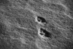 traces of unknown animals stock photo