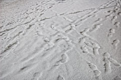 Traces on white snow. In winter royalty free stock photo