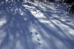 Footprints in the snowy forest in winter. The animals left traces in the snowy forest in winter stock photos