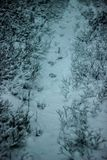 Traces of a wolf or a dog in the snow. stock photo