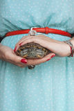 Trachemys scripta 淡水红色有耳的乌龟在妇女手上 免版税图库摄影