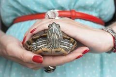Trachemys scripta 淡水红色有耳的乌龟在妇女手上 库存图片