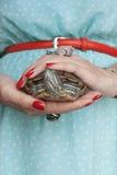 Trachemys scripta Słodkowodny czerwony słyszący żółw w kobiecie wręcza s obrazy royalty free