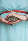 Trachemys scripta Słodkowodny czerwony słyszący żółw w kobiet rękach fotografia royalty free