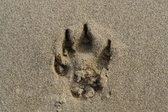Track. Of a dog paw in sand stock photos