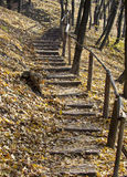 Track in the autumn. Forest in the mountain Stock Images