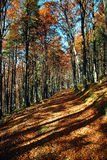 Track through autumn forest Stock Photos