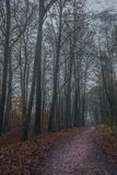 Path through the autumn woodland. Track through autumn woodland of deciduous trees on a misty day Royalty Free Stock Image