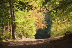 TRACK THROUGH AUTUMNAL FOREST. Scenic view of track receding through Autumnal forest under sunlight Stock Photo
