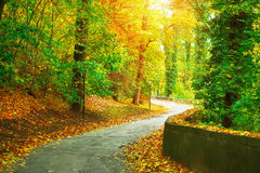 Track in autumnal park with yellow trees Royalty Free Stock Photography