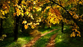 Track through Autumnal wood Royalty Free Stock Images