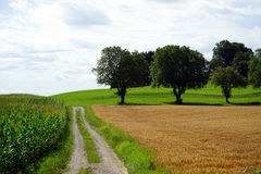 Track and corn field in Germany Stock Images