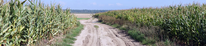 Track and corn field Royalty Free Stock Photography